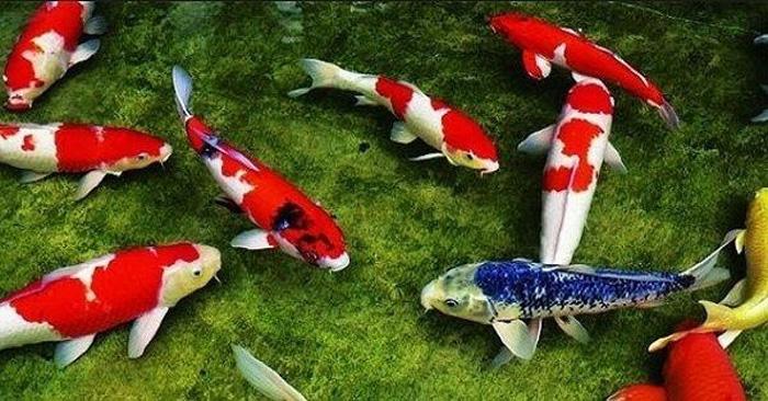 Con cá số mấy? Mơ thấy cá đánh đề con gì chuẩn?