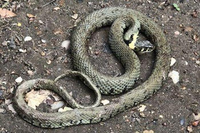 Con rắn số mấy? Mơ thấy rắn đánh đề con gì chuẩn?