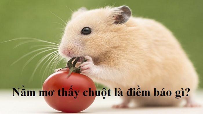 Con chuột số mấy? Mơ thấy chuột đánh đề con gì chuẩn?